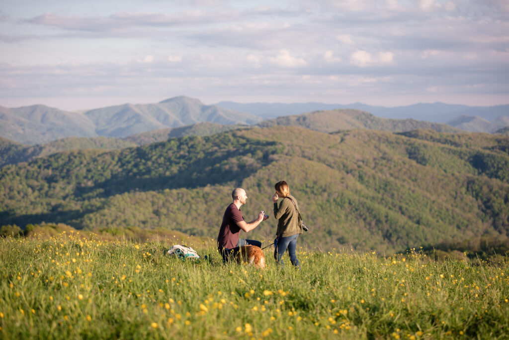 Cody down on one knee with long range view from Max Patch in the background. Cody is proposing in a field of yellow wildflowers