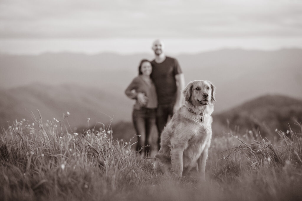 Black and white photo of a golden retriever dog in engagement photos on Max Patch